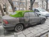 Kraków Nowa Huta. Tu przyroda pożera... samochody!
