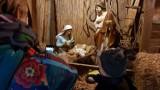 Boże Narodzenie 2019. Gdańskie Szopki Bożonarodzeniowe. Która świątynia ma najpiękniejszy wystrój świąteczny? Szopka z żywymi zwierzętami