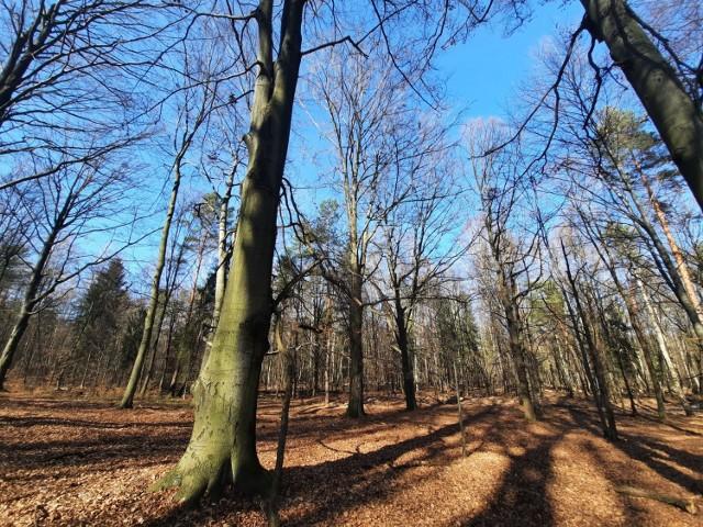 Lasy Murckowskie w Katowicach