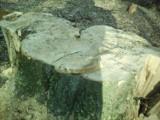 Wycinka w Lesie Wolskim. Pod topór poszło ponad 200-letnie drzewo?