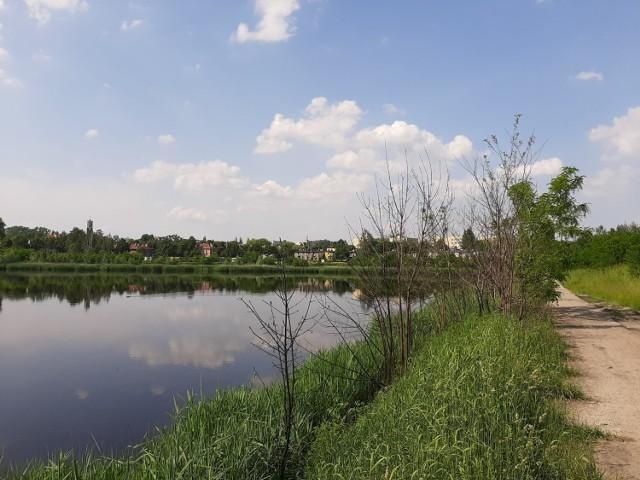 Staw Kalina zanieczyszczony jest m.in. fenolami