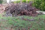 Jasielska straż miejska będzie karać za palenie trawy, liści i innych zielonych odpadów