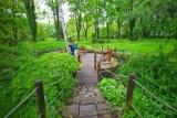 Zabrze skrywa tajemniczy ogród. Nie wierzycie? Ogród Botaniczny w Zabrzu fascynuje gości