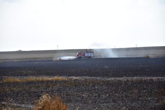 Pożar zboża na polu w Sulinowie, gmina Żnin.