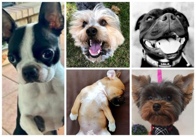 Zobaczcie najpiękniejsze psy na świecie. Najpiękniejsze, bo WASZE!