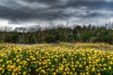 Jaka będzie wiosna 2020, kiedy zrobi się naprawdę ciepło, czy czeka nas lato wiosną? [DŁUGOTERMINOWA PROGNOZA POGODY]