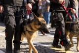 Psy będą wykrywać chorych na COVID-19 w Polsce. Zaczęły już szkolenie. Jak wygląda ich praca i gdzie się ich spodziewać?