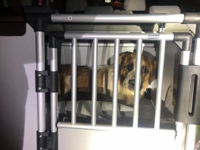 Jesienią 2020 roku działacze opolskiego TOZ odebrali w małej wiosce pod Brzegiem 64 psy rasy moskiewski stróżujący. Właścicielka została niedawno skazana, ale to jeszcze nie koniec sprawy.