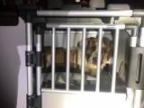Ponad 60 zwierząt wyrwanych z psiego piekła pod Brzegiem. Właścicielka pseudohodowli skazana