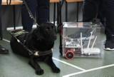 Automatyczny pies przewodnik dla niewidomych. Projektem uczniów ZSTiO w Jarosławiu zainteresował się wiceminister Paweł Wdówik