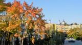 Wyzłocona jesień  zawitała do chełmskiego parku. Zobacz zdjęcia
