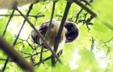 Cztery sowy zamieszkały na osiedlu Piekary w Legnicy [ZDJĘCIA]