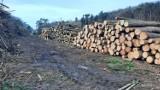 Gigantyczna wycinka drzew w Gorzowie. To tutaj, koło Słowianki, zbudowana zostanie hala widowiskowo - sportowa