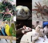 Zwierzęta do kupienia w województwie dolnośląskim. Na niektóre z nich wydasz tysiące ZDJĘCIA
