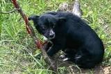 """Ktoś porzucił psa w lesie koło Krosna Odrzańskiego. Przywiązał do drzewa. """" Nie mógł się nawet ruszyć. Nie miał wody ani jedzenia"""""""