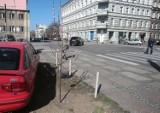 Przy ul. Łokietka w Szczecinie mieszkańcy sami posadzili drzewa w odpowiedzi na wycinkę