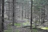 """""""Słowo las znaczy świat"""". Las w obiektywie Survival Piła [ZDJĘCIA]"""