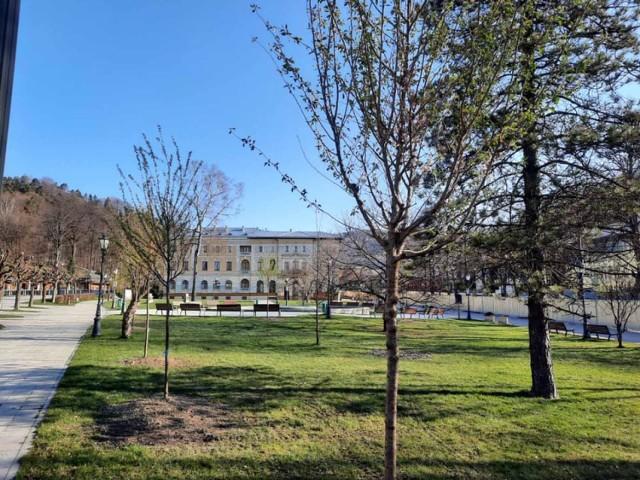 W centrum Krynicy-Zdrój posadzono wiśnie z Japonii, odtworzą także słynne pola krokusów