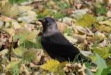 Ptaki w zagłębiowskich parkach jesienną porą