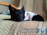 Animal Security: Wyrzucona z drugiego piętra Tina czeka na nowy dom