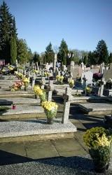 W Suwałkach na grobach zasłużonych dla miasta osób ustawiono 800 chryzantem