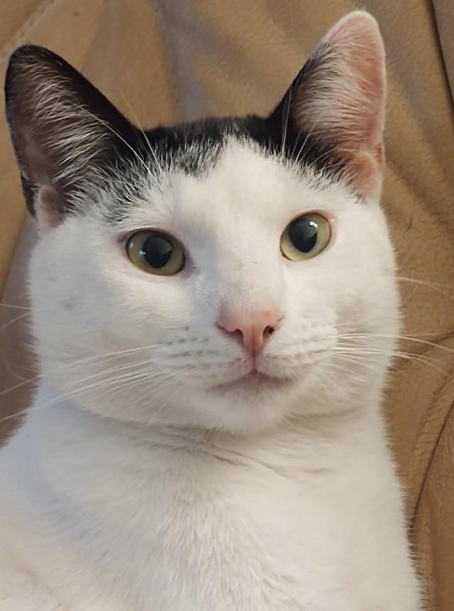 Oto najpiękniejsze koty, które nam przesłaliście.