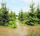 WOJ. ŚLĄSKIE: Lasy w naszym regionie może zniszczyć prywatyzacja