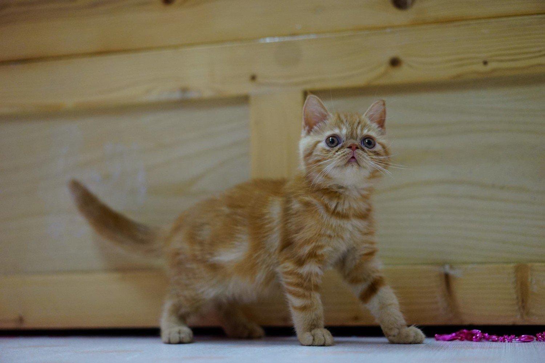 Garfield W Twoim Domu Naszemiastopl