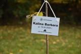 Ostroróg. Drzewka maluchów zostaną zasadzone na Morminie