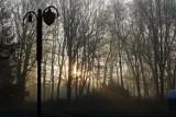 Gęsta mgła w nocy z soboty na niedzielę. Ostrzeżenie dla kierowców!