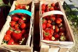 Truskawkowy zawrót głowy. Zobacz, gdzie w Jaśle można kupić te owoce i ile kosztują [CENY, 18.06]