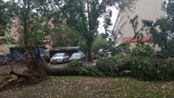 Burza w Łodzi. Powalone drzewa i zalane ulice [ZDJĘCIA]