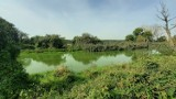 Woda wypłynęła z zalewu i Prosna zrobiła się zielona. ZDJĘCIA