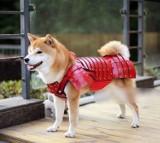 Są już samurajskie zbroje dla psów i kotów. Stworzyła je japońska firma