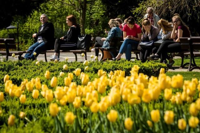 20 tys. cebulek kwiatowych zostanie posadzonych w 12 miejskich lokalizacjach Gdańska