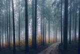 Zabiegi agrolotnicze w lubuskich lasach. Także w Nadleśnictwie Nowa Sól