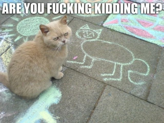 To koty hodują ludzi i rządzą światem. Internet ma na to co najmniej kilkadziesiąt dowodów
