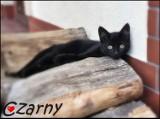 Reks prosi o przygarnianie zwierząt. Zobacz koty czekające na dom