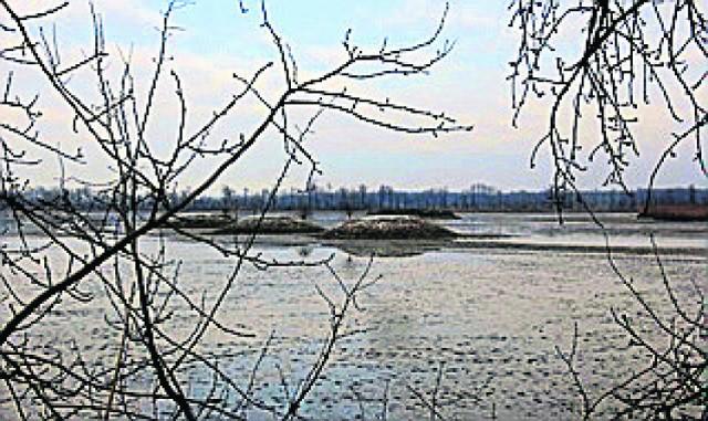 Rezerwat  Łężczok - wykoszone na zimę wyspy na stawie Babiczok