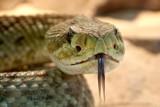 Warszawa: wąż uciekł z terrarium. Zauważyli go mieszkańcy osiedla