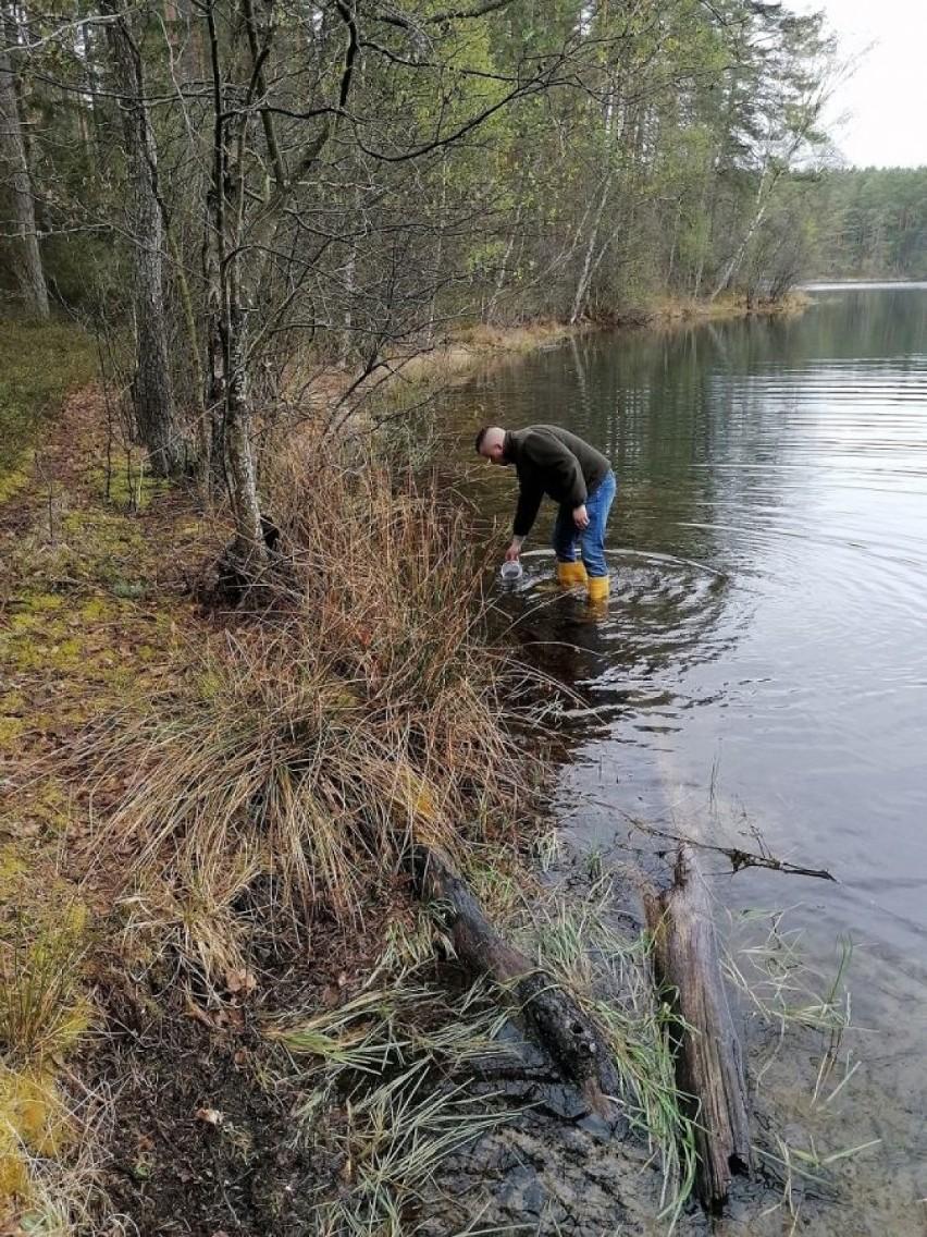 Narybek szczupaka już pływa w trzech jeziorach powiatu bytowskiego