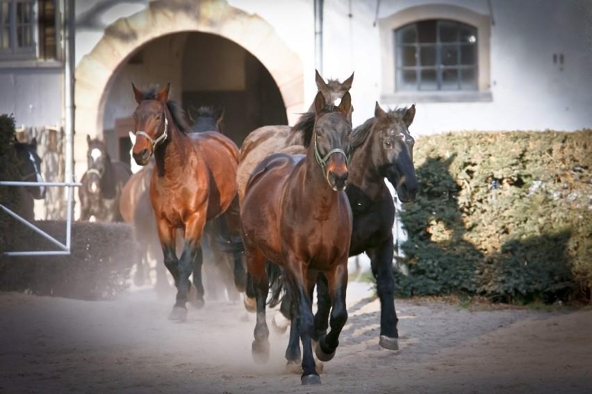 Konie dla polskiego PKB