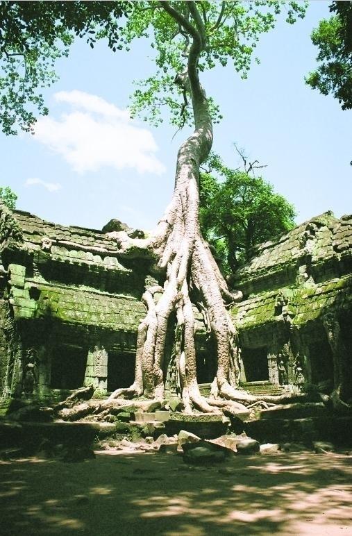 Świątynię Ta Prohm w kompleksie Angkor pochłonęła dżungla
