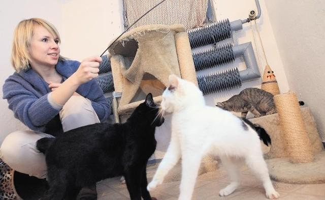 Marta Karbowiak z Fundacji Koci Pazur zajmuje się dzikimi kotami z Wolnych Torów