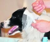 Gdynia: Jak udzielić pierwszej pomocy psu?