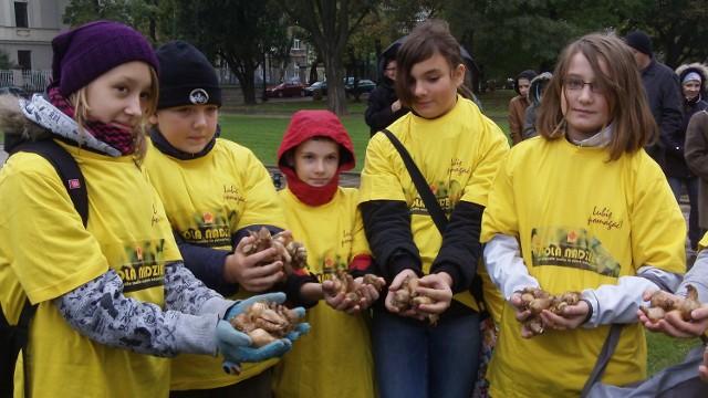 Uczniowie złódzkich szkół zasadzili przed katedrą tysiąc żonkili