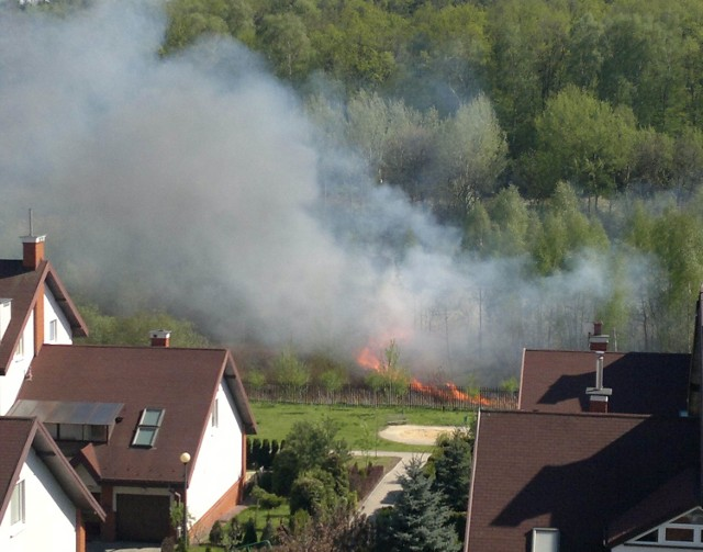 Pożar traw obok lasu Stary Gaj