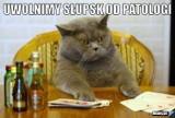 Z tego kpią internauci. Memy o Sławnie, Darłowu, Słupsku i Koszalinie