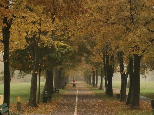Dolina Trzech Stawów w Katowicach i złota polska jesień w październiku 2020  Zobacz kolejne zdjęcia. Przesuwaj zdjęcia w prawo - naciśnij strzałkę lub przycisk NASTĘPNE