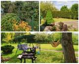 Ile kosztuje oaza zieleni w środku miasta? Sprawdź ogródki działkowe na sprzedaż w LUBLIŃCU. Oto TOP 10 ofert!